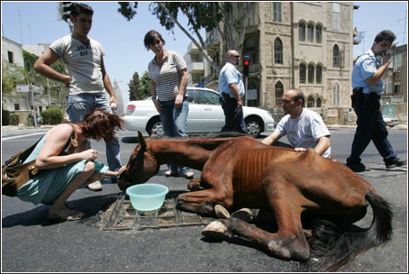 Badly Abused Horses Badly Abused Hor
