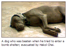 A dog who was beaten when he tried to enter a bomb shelter; evacuated by Hakol Chai
