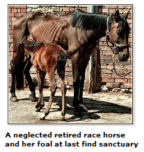 Neglected racehorse and foal find sanctuary